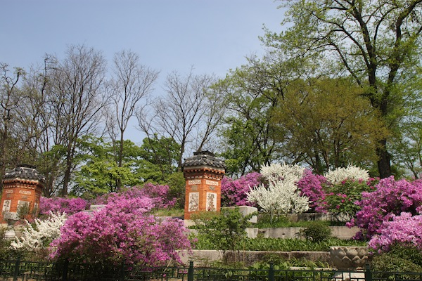 Part of the palace garden behind the queen's quarters in Gyeongbok Palace.