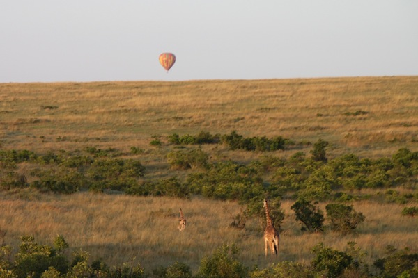 View of the Maasai Mara landscape as well as giraffes moving away from a floating balloon. A second balloon is visible in the distance.
