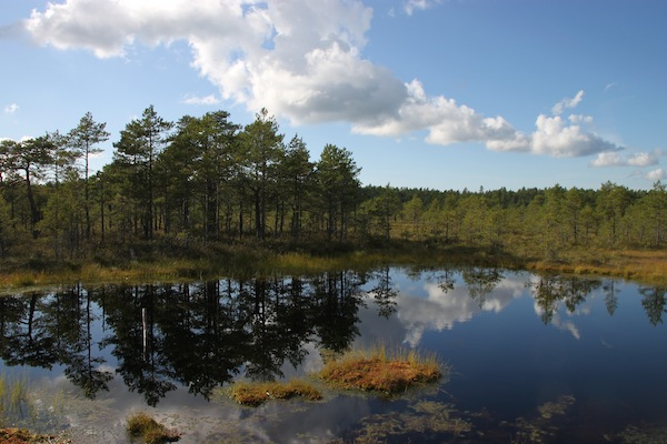 Estonia: A Squishy Stroll Through the Bogs